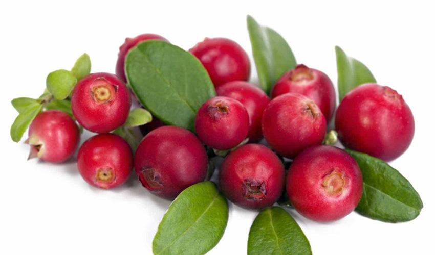 Arando anti-inflamatorio e antioxidante